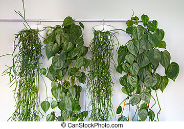 Collection of hanging green plants