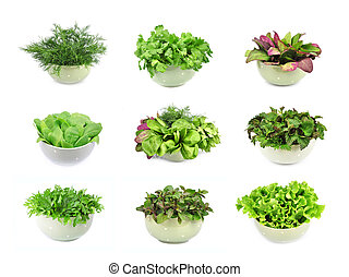collection of herbs and spices