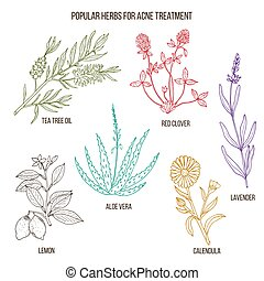 Collection of herbs for acne treatment.