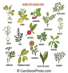 Collection of herbs for angina treatment