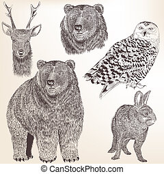 Collection of high detailed vector animals for design