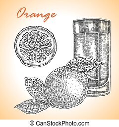 Collection of highly detailed hand drawn orange. Orange juice ve