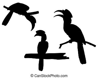 Collection of Hornbill Bird on tree branch Silhouettes.