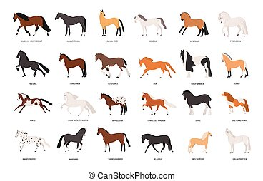 Collection of horses of various breeds isolated on white...