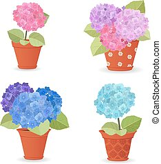 collection of hortensia planted in ceramic pots for your design