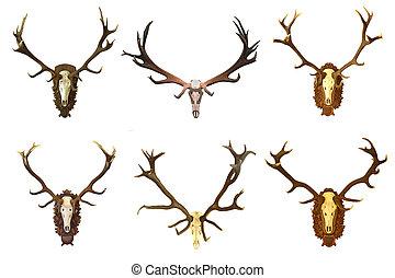 collection of huge red deer buck hunting trophies