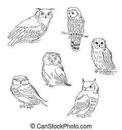 Collection of images of owls painted in a realistic style