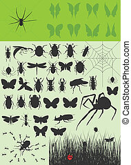Collection of insects2 - The big collection of insects. A...