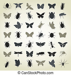 Collection of insects4 - The big collection of insects. A...