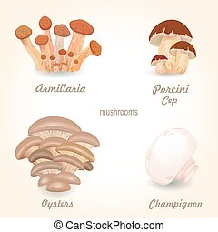 Collection of isolated edible mushrooms for your design