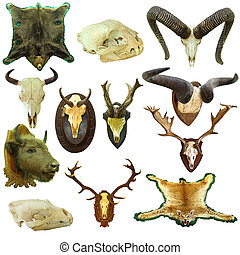 collection of isolated hunting trophies