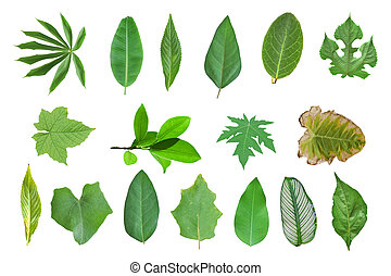 Collection of leaves isolated on a white