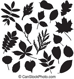 Collection of leaves silhouettes