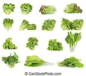 Collection of Lettuce isolated on white background
