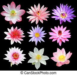 Collection of lotus and water lily isolated on black background