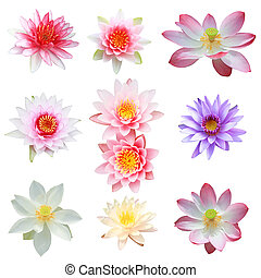 Collection of lotus and water lily isolated on white background