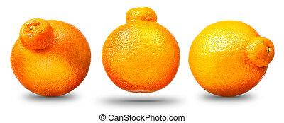 Collection of mandarin or tangerine citrus fruit