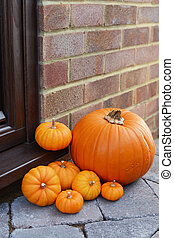 Collection of mini pumpkins and a large orange pumpkin