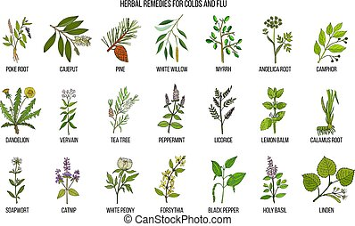Collection of natural herbs for colds and flu. Hand drawn...