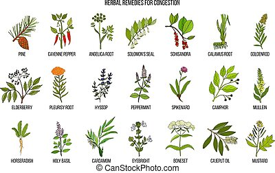 Collection of natural herbs for congestion. Hand drawn...