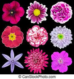 Nine Various Pink, Purple, Red Flowers Isolated on Black
