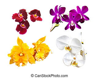 Collection of Orchid isolated on a white background