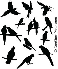 Collection of parrots silhouettes - vector