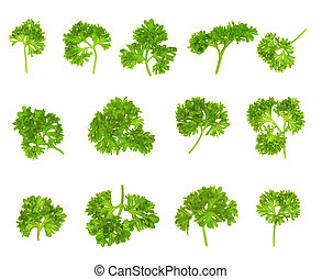 collection of parsley isolated on white background