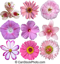 collection of pink flowers isolated on white