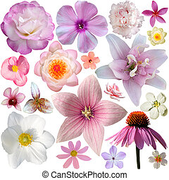collection of pink summer flowers isolated on white