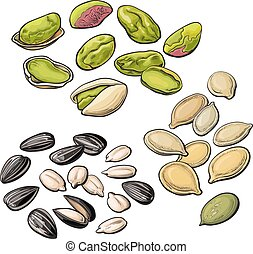 Collection of pistachio, sunflower and pumpkin seeds, vector...