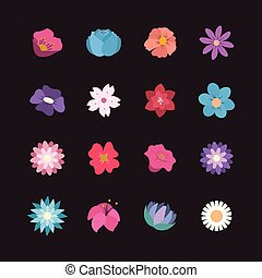 Collection of pretty flowers