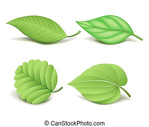 Collection of Realistic Green Leaves Set. Vector...