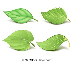 Collection of Realistic Green Leaves Set. Vector