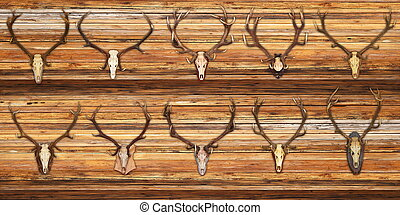 collection of red deer trophies on wood background