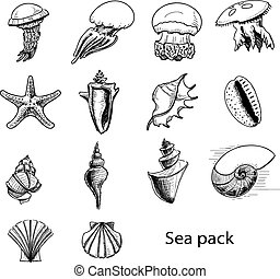 Collection of sea animals and shells.