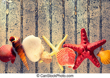 Collection of sea shells and stars in closeup