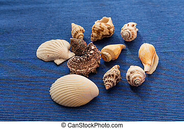 Collection of seashells isolated on blue background