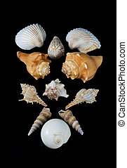 Collection of Seashells - Several different kinds of ...