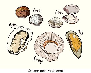 Shell, Hand draw sketch vector. Seafood set.
