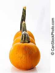 Collection of Small Pumpkins on a Bright Background