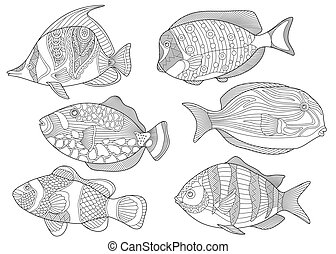 Collection of tropical fishes