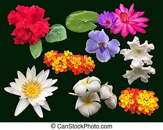 Collection of tropical flowers on black background.