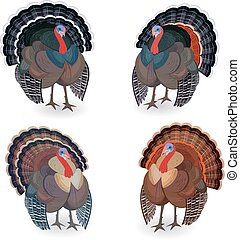 Collection of Turkeys for your design