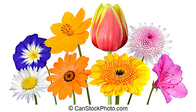 Collection of Various Colorful Flowers Isolated on White