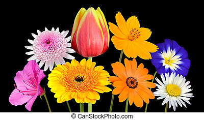 Collection of Various Colorful Flowers Isolated on Black -...
