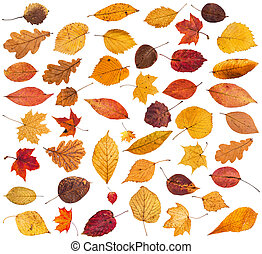 collection of various dried autumn fallen leaves isolated on...