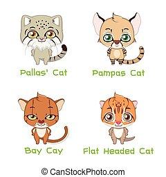 Collection of various wild cat species