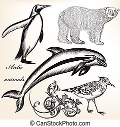 Collection of vector arctic animals.eps