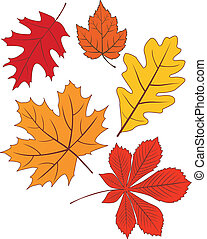 Collection of vector autumn leaves